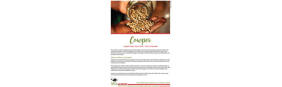 Crop Information Sheet: Cowpea