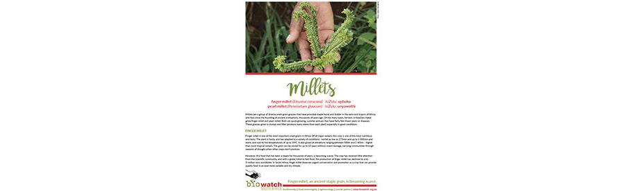 Crop Information Sheet: Millets